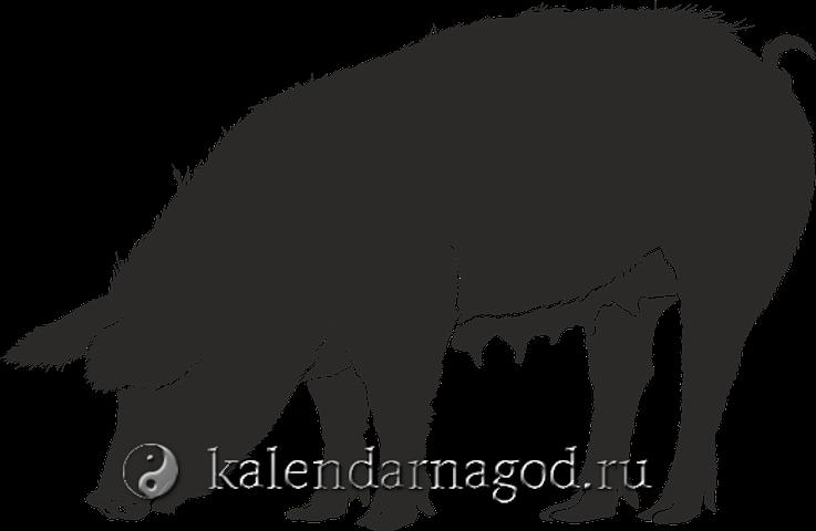 goroskop-na-2019-god-kaban-1-81.png