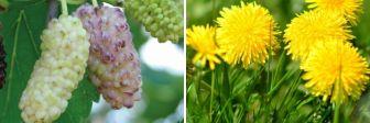 Натуральные жиросжигатели: 7 растений, ускоряющих похудение