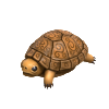 b_turtle.png